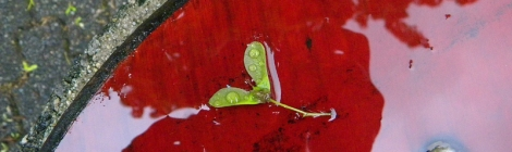 green winged seed on a wet red chair