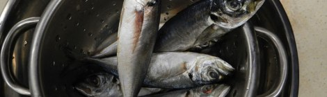 Tapas class - mackerel destined to become escabeche