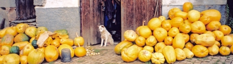 a 'perro carinoso' suffers from squash overload