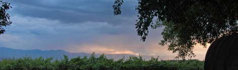 vinyard in Cafayate, Argentina