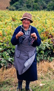 picking grapes in Portugal