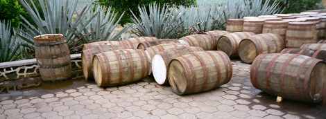 Blue Agave & Oak Barrels