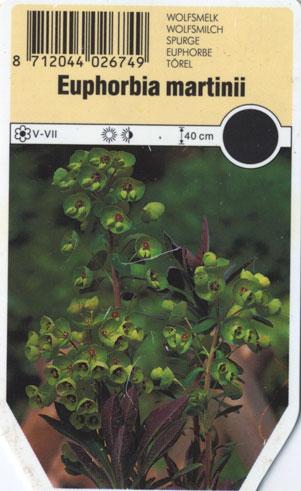 EuphorbiaMartiniiw