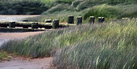 sea grasses and old wood in Richmond