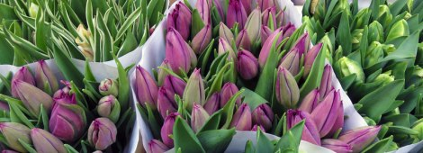 Tulips for sale at Amsterdam's Flower Market