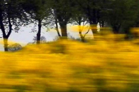 canola fields flyby