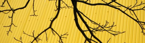 Granville Island: Yellow/Black Contrasting Branches