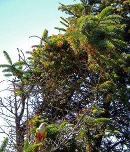 Bird in Deception Pass State Park