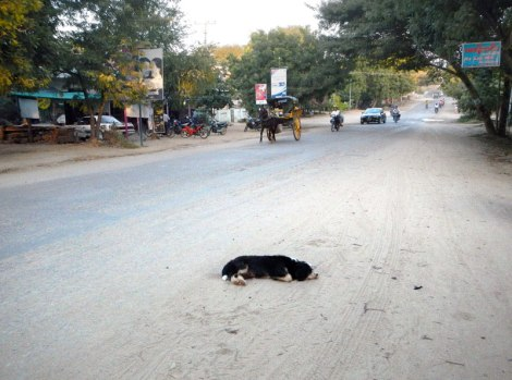 In Bagan, a Sleeping Dog Acts as a Route Marker