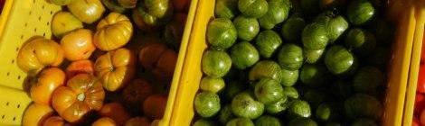 Portland Farmer's Market Tomatoes