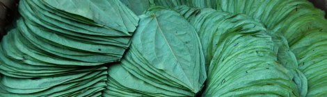 in a Yangon market, betel leaves arrayed for sale