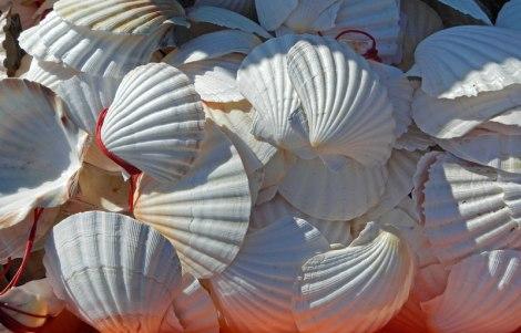 Scallop Shells, the Sign for El Camino