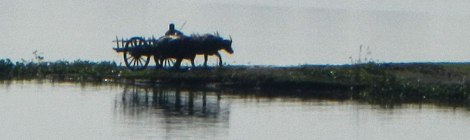 View from U Bein Bridge of Farmer with Oxen