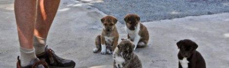 Inle Lake Bike Trip: Puppies At theTemple