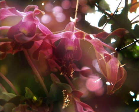 Singapore Botanical Garden Orchids