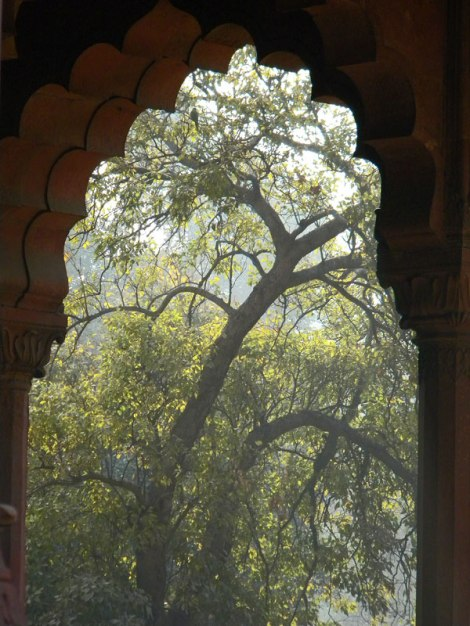 Intricate Tracery of a Tree Through a Door at New Delhi's Red Fort