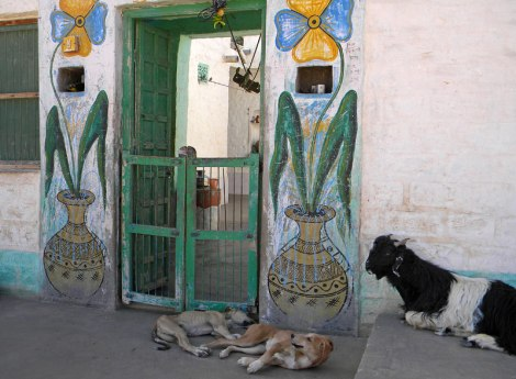 Green door in a village in India
