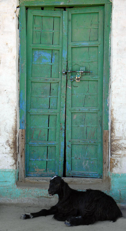 Green door in a village in India, with a goat