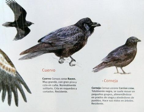 Sign describing the crows and ravens of Picos de Europa