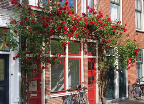 Smelling the roses in Delft