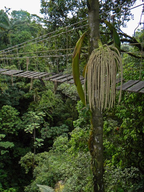 Hanging bridge in the Costa Rican jungle