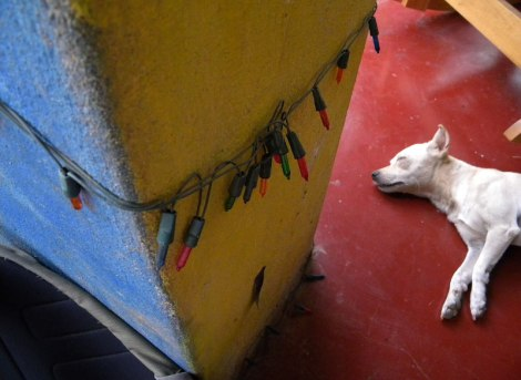 In Islita, an artistic village, an artist's dog relaxes in an artistic way. (Costa Rica)