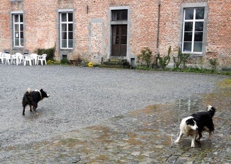 The Chateau-Ferme wasn't open when we arrived but these two dogs came running out and tried to herd us tourists into the yard anyway. (Belgium)