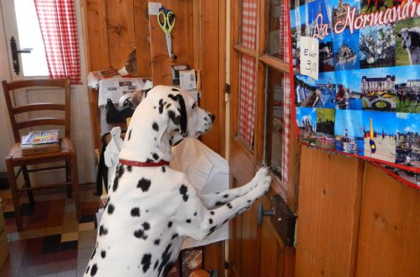 Dog at the door of a tasty treats store in Etretat
