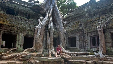 Angkor Wat Temple Enveloped in a Overgrown Banyan Tree
