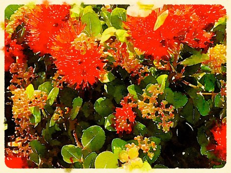 The striking red flowers of a bottle brush plant growing beside the seashore run through the photo app Waterlogue 'Travel' look