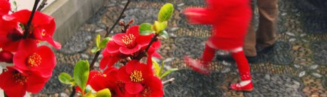 Chinese New Year Flowering Quince Bonsai