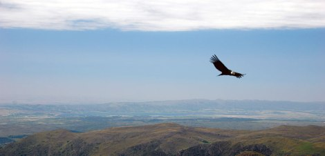 A canyon view with a condor at the Quebrada del Condorito National Park in Argentina
