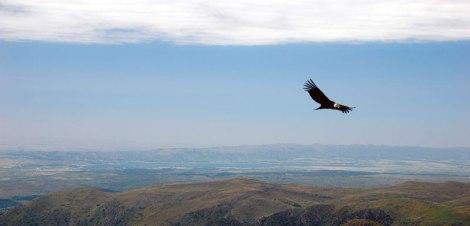 A canyon view with a condor at the Quebrada del Condorito National Park in Argentina