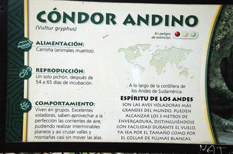 A sign describing the condors andinos at the zoo in Buenos Aires, Argentina