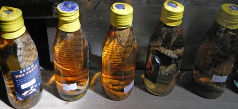 Snake wine; don't tell me you're supposed to drink it!