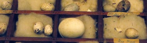 Egg Shells in Boxes at the Beaty Biodiversity Museum at UBC in Vancouver