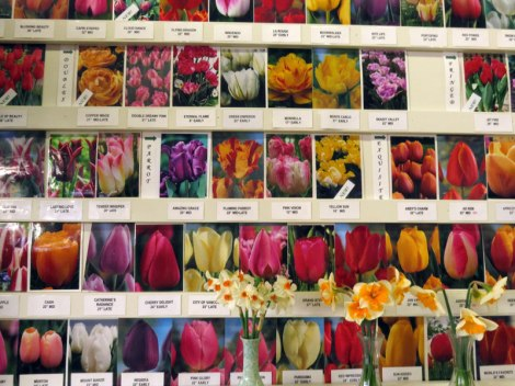 Bulbs for sale from TulipTown in La Conner