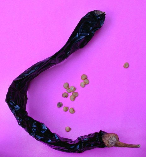 pasilla, a dried chile whose flavour is essential in Tortilla Soup and Chiles Capones.