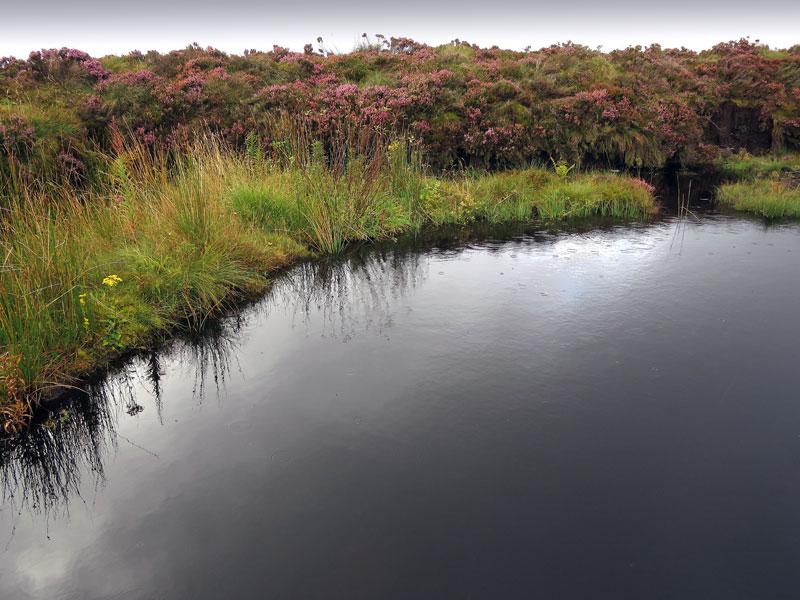 A bog in Antrim Glens, Northern Ireland, UK