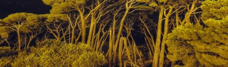 Belfast's Culture Night: Trees Evolving Exhibit