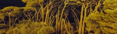 Belfast's Culture Night: Trees Evolving Exhibit
