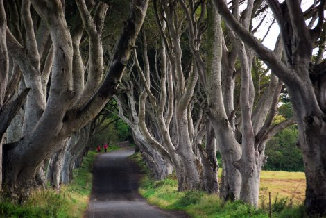 Dark Hedges in the Antrim Glens, Northern Ireland, UK