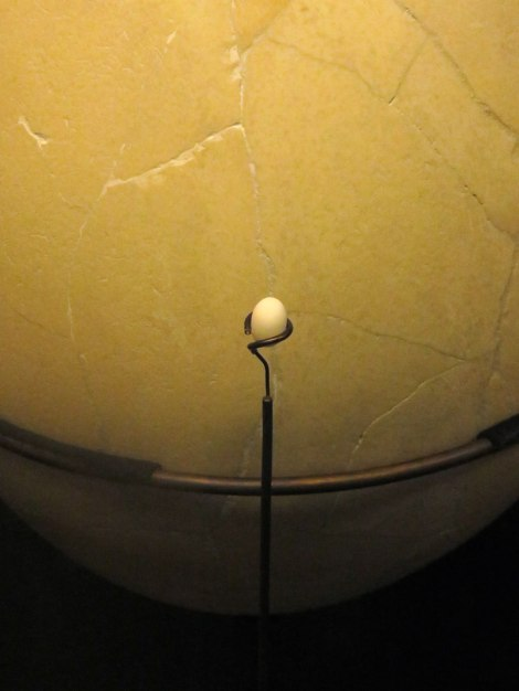 Beatty Museum of Biodiversity: The World's Biggest Egg vs. the World's Smallest