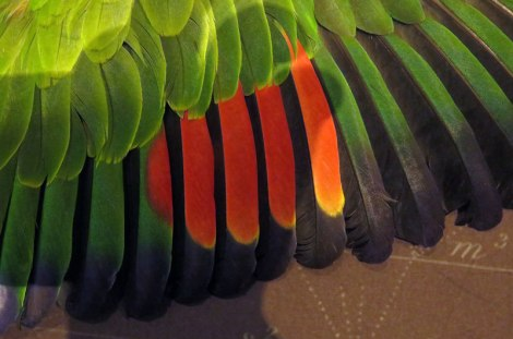 Brightly coloured feathers of a parrot at theBeaty Biodiversity Museum at UBC in Vancouver