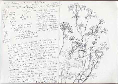 Wales journal with wild flower drawing