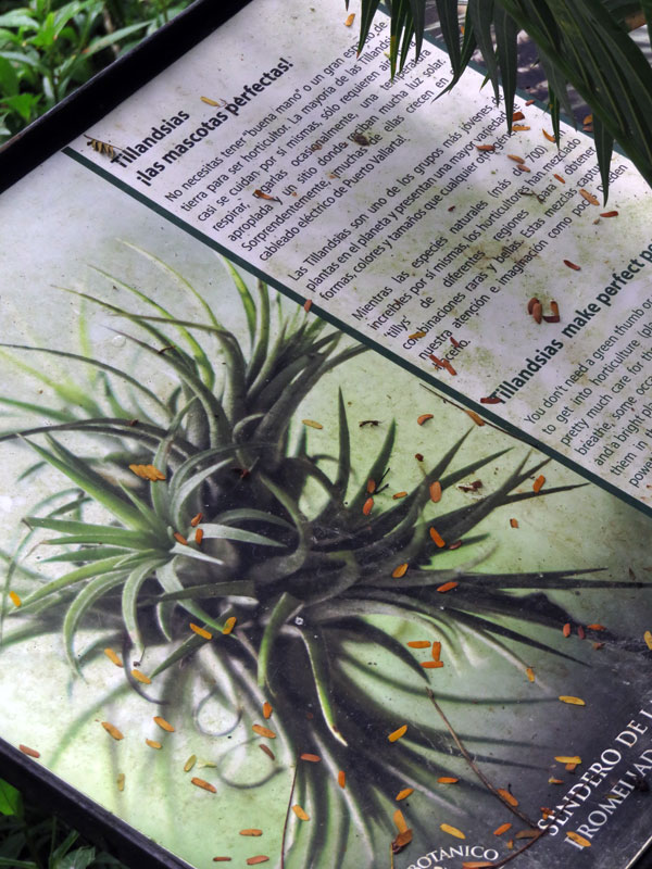 Tillandsia notes at the Puerto Vallarta Botanical Garden