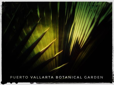 Fan palm in the Puerto Vallarta Botanical Garden using the photo app Snapseed to make a poster