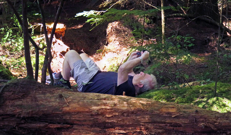 Mikey taking a tree photo in Lynn Canyon in North Vancouver