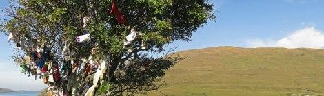 Fairy tree on Killary Harbour Drive