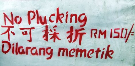 Cameron Highland's sign 'No Plucking'